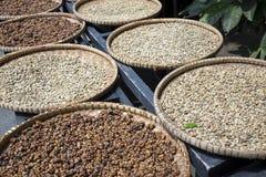 Rząd talerze z surowymi fasolami luwak kawa na drewnianym stole suszy Kopi luwak lub cybet kawa jesteśmy jeden światowy ` s mo Zdjęcie Royalty Free