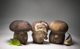 Rząd trzy świeżo zbierającego cep porcini borowika z basilu i czosnku kopią interliniuje tła pojęcia kulinarnego przepis Zdjęcia Stock