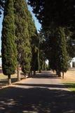 Rząd Włoscy Cyprysowi drzewa na sławnym Appian sposobie zdjęcie stock