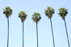 rzędów palmowi drzewa Fotografia Royalty Free