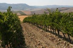 Rzędy winograd zdjęcia royalty free
