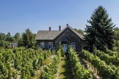 Rzędy winogrady przed winnicą Zdjęcie Stock