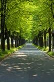 rzędów parkowi drogowi drzewa Zdjęcia Stock