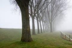 Rząd bezlistni drzewa obok dajka Fotografia Stock