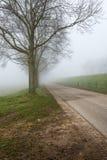 Rząd bezlistni drzewa w mgle Obraz Stock