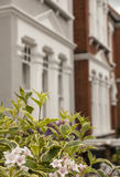 Rząd domy z niektóre kwiatami w przedpolu Zdjęcie Stock