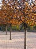 rząd drzew zdjęcia royalty free
