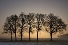 Rząd drzewa przy zmierzchem Obrazy Royalty Free