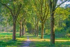 Rząd drzewa w polu Zdjęcia Royalty Free