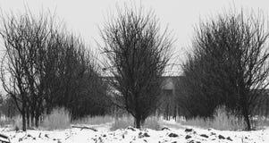 Rząd drzewa w zimy scenerii zdjęcie stock
