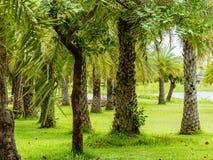 Rząd nafciany drzewko palmowe w miasto parku Zdjęcie Stock