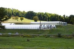 Rząd zieleni domy w tocznych wzgórzach Pennsylwania Obrazy Royalty Free
