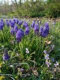Rzędy kwiaty w purpurach zdjęcie stock