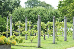 Rzędy ogródu drut Zdjęcie Stock