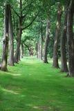 Rzędy starzy drzewa, North Yorkshire Obrazy Royalty Free