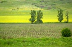 Rzędy upraw wzgórza Zdjęcie Stock