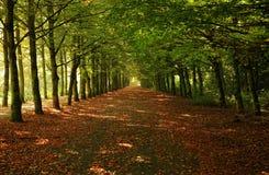 rządy zielonych drzew zdjęcia stock