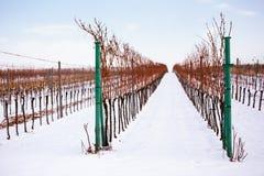 Rzędy zima winnicy w republika czech Obrazy Royalty Free