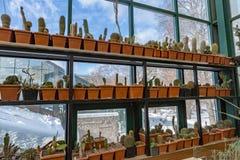 Rzadcy egzotyczni kaktusy Zdjęcia Stock