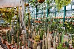 Rzadcy egzotyczni kaktusy Obrazy Stock