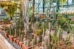 Rzadcy egzotyczni kaktusy Fotografia Stock