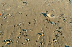 Rzadcy mali otoczaki na piasku, mali kamienie na plaży w piasku Fotografia Stock