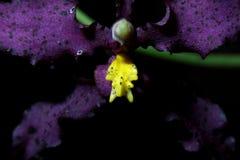 Rzadka orchidea zdjęcie stock