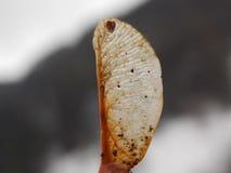 Rzadki i odosobniony liść w jesieni zdjęcia royalty free