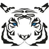 rzadki tygrysi biel bardzo Zdjęcie Royalty Free