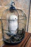 Rzeźba Harry Poter śnieżna sowa w klatce w ścianie zdjęcia stock