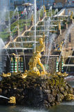 Rzeźba Samson drzeje lwa usta zbliżenie słoneczny dzień w Lipu peterhof Zdjęcia Stock