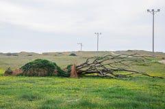 Rzeźba tworząca od piaska, trawy i gałąź waza, Zdjęcie Stock