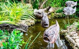 Rzeźbiąca ryba w rzece Obraz Royalty Free