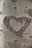 rzeźbiący serce Obraz Royalty Free