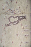 rzeźbiący serce Zdjęcie Royalty Free