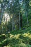 Rze do ¼ de Achstà da área da proteção da paisagem O lago Piburger vê, as conservas de natureza as mais velhas de Tirol Imagens de Stock Royalty Free