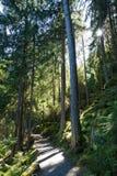 Rze do ¼ de Achstà da área da proteção da paisagem O lago Piburger vê, as conservas de natureza as mais velhas de Tirol Imagens de Stock