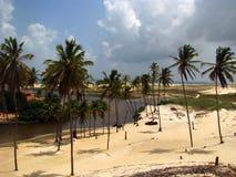 Drzewka palmowe w północnym wschodzie Brazil Zdjęcia Stock