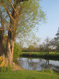 rzeczna drzewna płacząca wierzba Obrazy Royalty Free