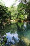Rzeczna laguna Fotografia Royalty Free