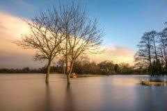 Rzeczna Shannon powódź Fotografia Royalty Free