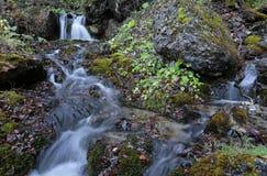Rzeczna siklawa w Carpathians górach lasowych fotografia stock