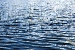 Rzeczna trawa Zdjęcie Stock