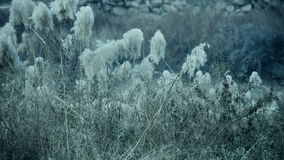 Rzeczne płochy w wiatrze, potrząsalny pustkowie zdjęcie wideo