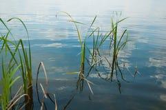 Rzeczne płochy w tle rzeka z niebem odbijali w wodzie Fotografia Royalty Free