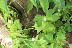 Rzeczne rośliny fotografia stock