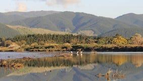 Rzecznego usta krajobraz Nowa Zelandia. Zdjęcie Stock