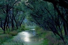 rzeczni drzewa Obrazy Royalty Free