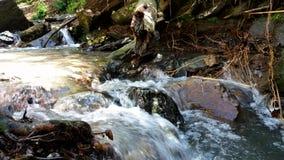 Rzeczni przepływy uwalniają w lesie Zdjęcia Royalty Free