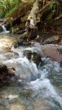 Rzeczni przepływy uwalniają w lesie zdjęcie royalty free
